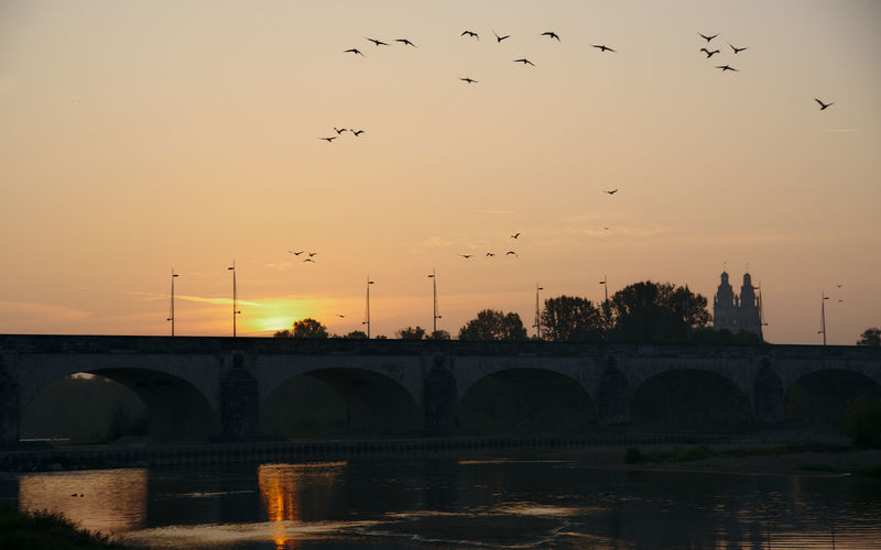Flock of birds flying over river during sunset