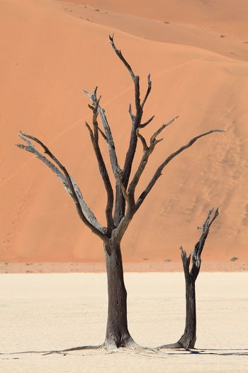 Deathvlei, Namibia Acacia Tree Arid Climate Arid Landscape Close-up Dead Plant Deathvlei Dried Plant Dry Acacia Namib Desert Namib Dunes Namibia Natural Pattern Silhouette Surreal Tranquility Tree Trunk Fine Art Photography