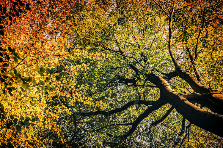 Tree Plant Autumn Beauty In Nature Branch Growth Nature Day Tranquility Change Outdoors No People Sunlight Trunk Tree Trunk Scenics - Nature Low Angle View Land Tranquil Scene Full Frame Springtime Tree Canopy  Cherry Blossom Speulderbos