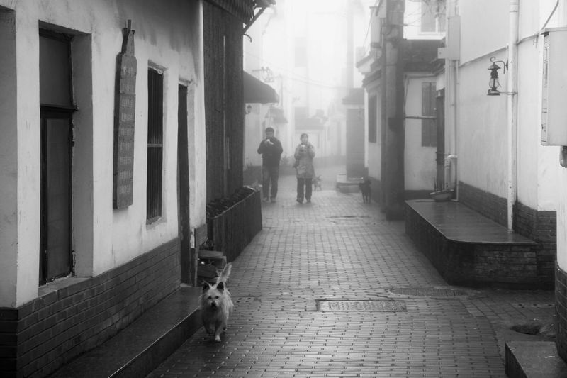 Hanging Out Streetphotography Streetphoto_bw Monochrome Blackandwhite Black And White Black & White Dog Architecture People Light Light And Shadow EyeEm Best Shots EyeEm EyeEmBestPics EyeEm Best Shots - Black + White