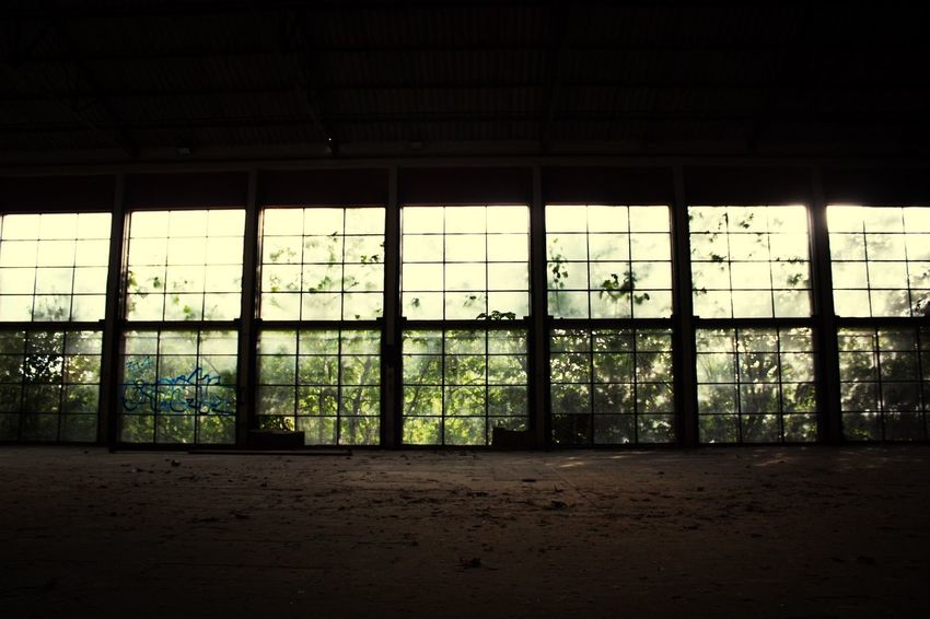 Windows Plants Abandoned Canon450d