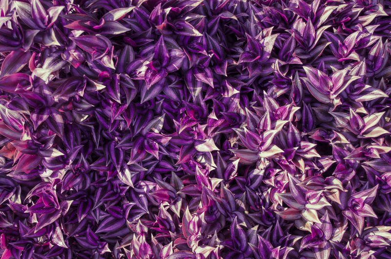 How about a wallpaper out of this? Abundance Backgrounds Flower High Angle View Mosaic Natural Pattern Nature Purple Purple Flower Wallpaper First Eyeem Photo
