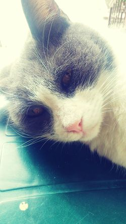 Cat Gato Sleep Relaxing Cats Sleeping Cat Hi! Taking Photos Cat♡ Gata Gata ♡ Mi Gata GataLinda Gata🐱 Gata! Gata