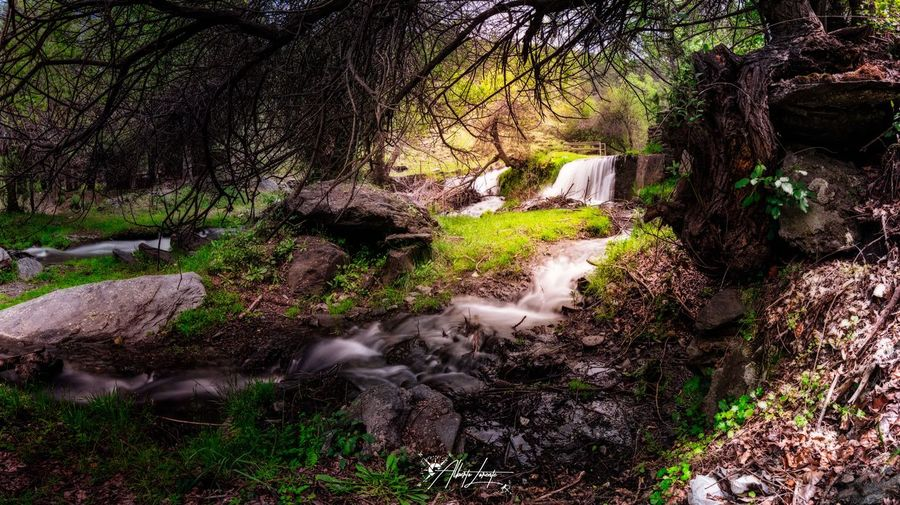 El bosque animado No People Land Outdoors Scenics - Nature Water Green Color Tranquil Scene High Angle View Non-urban Scene Forest Sunlight Landscape Tranquility