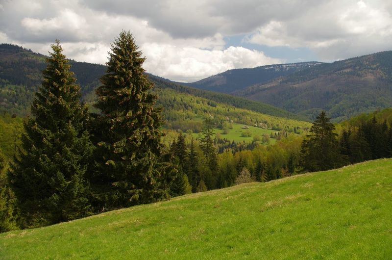 Landscape in Slovenské Rudohorie, Slovakia Beauty In Nature Carpathians Cloud - Sky Day Evergreen Tree EyeEmNewHere Forest Green Color Growth Landscape Louka Lush Foliage Mountain Nature No People Outdoors Plant Rural Scene Scenics Sky Slovakia Slovakia🇸🇰 Slovensko Spruce Tree