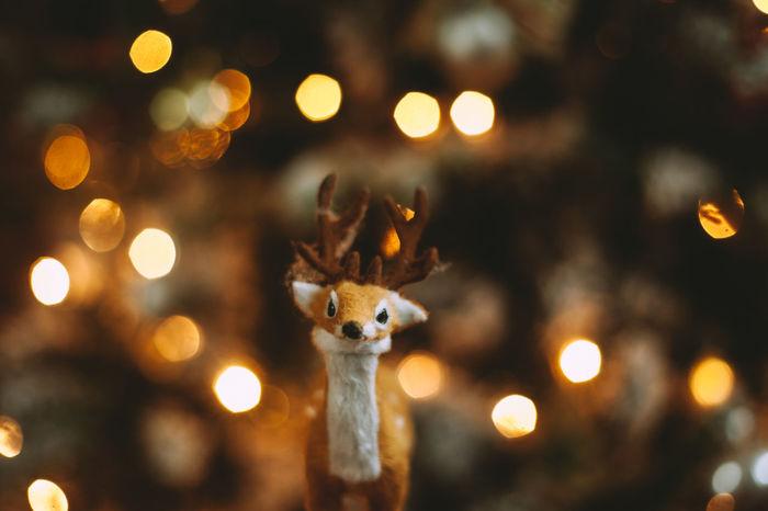 Close-up of reindeer figurine against illuminated christmas tree