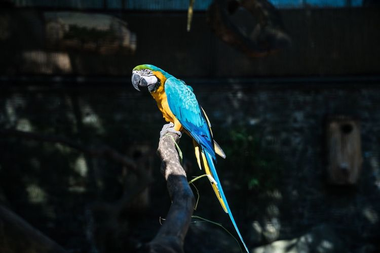 Parrot Bird Zoo Animals Colors Belgium Pairi Daiza