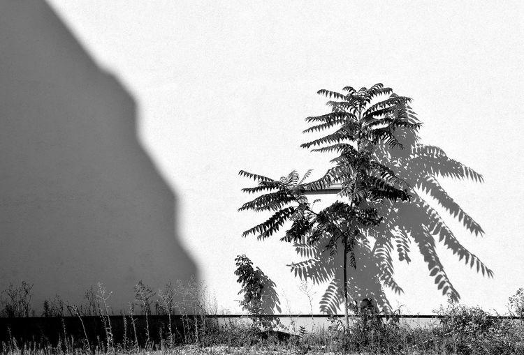 Berlin Shadows