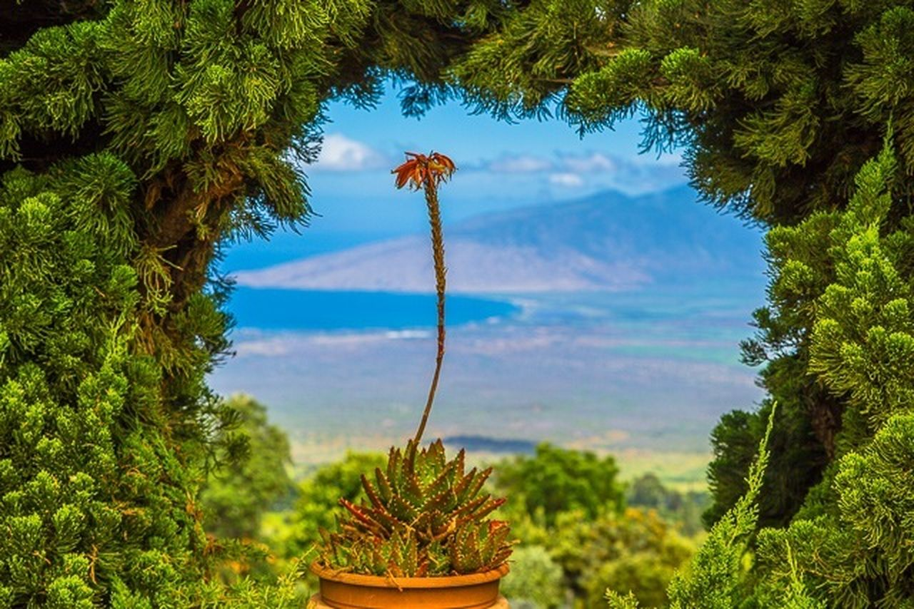 growth, plant, tree, nature, growing, no people, green color, beauty in nature, cactus, day, tranquility, leaf, outdoors, saguaro cactus, sky, scenics, close-up, fragility