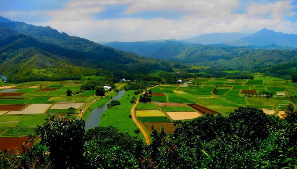 Agriculture Beauty In Nature Landscape Nature Scenics Mountain Field Tranquil Scene Tranquility Rural Scene Growth Tree Outdoors Day No People Green Color Patchwork Landscape Sky Mountain Range Terraced Field Kauai Hawaii ♥️