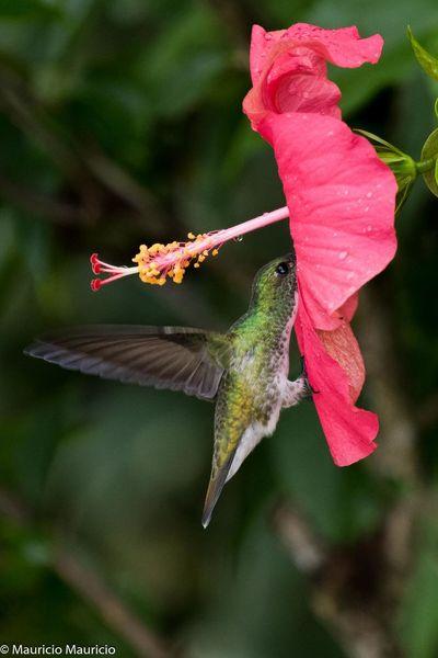 Ave Vuelo Belleza Natural Bird Birdinflight Birding Birding And Nature Center Birdingphotography Birds Birds_collection Nature Nature_collection Outdoors Vuelo De Aves