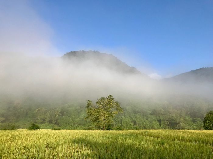 Travel Thailand🇹🇭 EyeEm Nature Lover Plant Environment Tree Landscape Land Scenics - Nature Beauty In Nature Field Sky Tranquil Scene Nature Growth Tranquility Mountain Fog No People Non-urban Scene Grass Rural Scene Outdoors