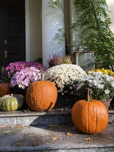 View of pumpkins on flowering plants during autumn