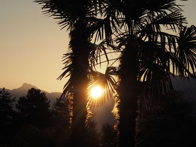 Beauty In Nature Day Nature No People Outdoors Palm Tree Scenics Silhouette Sky Sun Sunrise Sunrise_Collection Switzerland Tree Tree Area