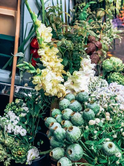 Flowers growing in market