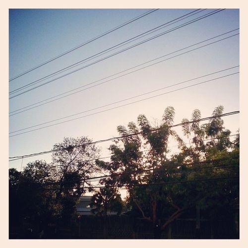 Morning Sun Tree Naturalflir