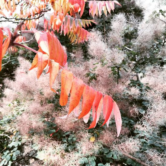 Flower Plant Fragility Beauty In Nature Outdoors Orange Color Red Autumn Leaves In Bloom Non-urban Scene Freshness Petal Nature Growth Plant Life Tranquility