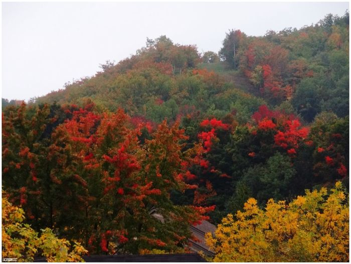Fall2014 Fall Colors Brucegreysimcoe Blue Mountain