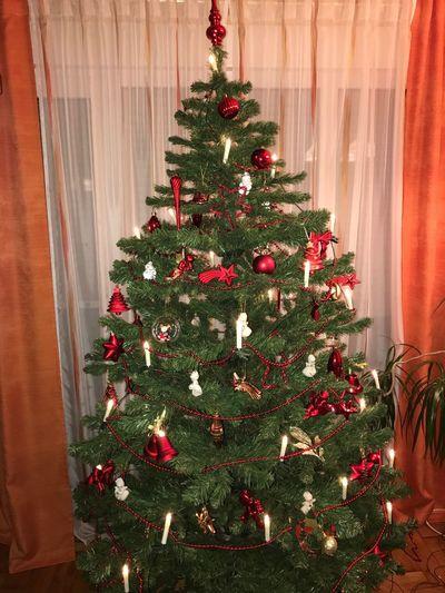 Weihnachtsbaum Weihnachtszeit Weihnachten Weihnacht christmas tree Holiday Celebration Decoration Christmas Decoration Tree Christmas Ornament Christmas Lights Indoors