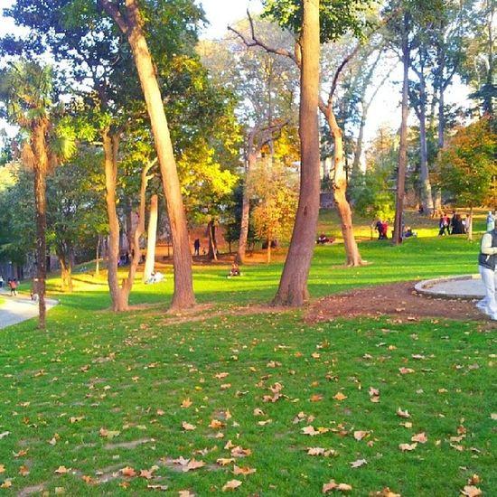 ILove Autumn Instagram Gulhaneparki