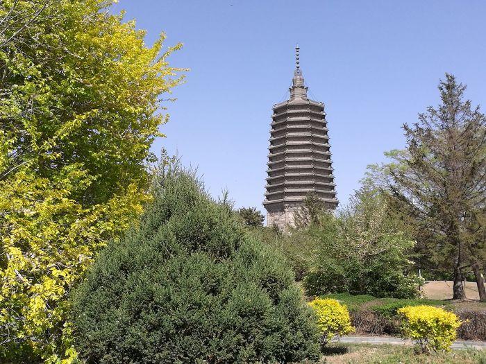 Temple - Building Tree City Sky Architecture