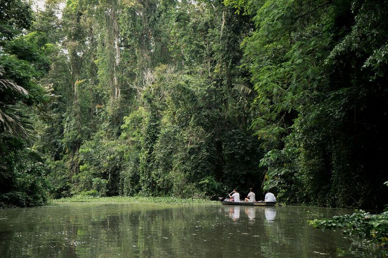 Costa Rica Canal Jungle Men Rainforest Tortuguero  Tree Water Waterfront