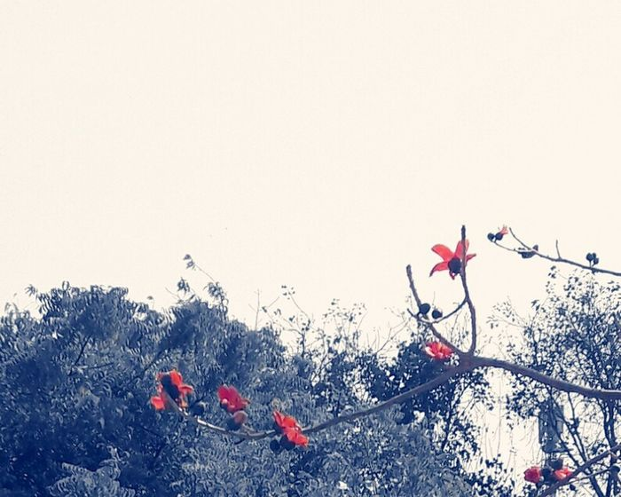 Red Nature Flower No People Tree Freshness Day Fragility Nature Beauty In Nature Spring Is In The Air Orange Color Delhi Vignette Spring Into Spring