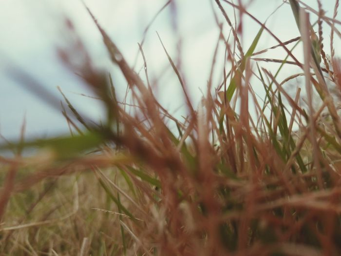 Nature Plant Growth Outdoors No People Day Grass