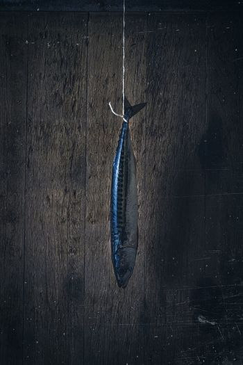 Close-up of fish hanging on wall