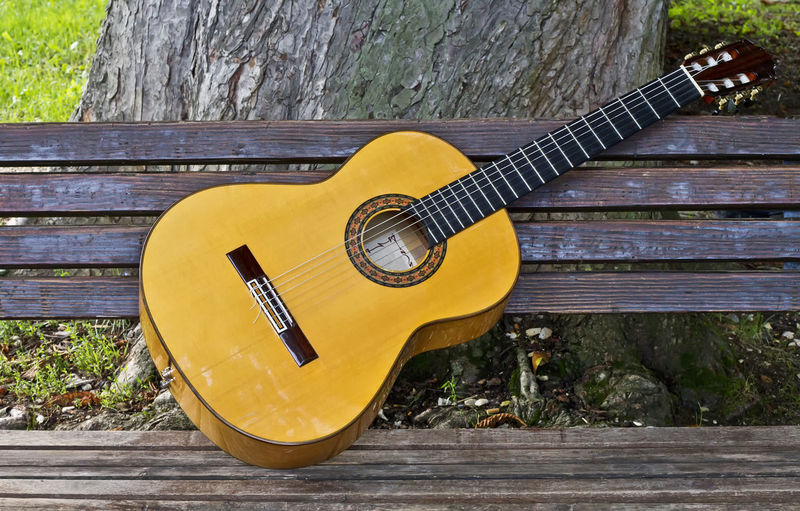 Close-up of guitar on tree trunk