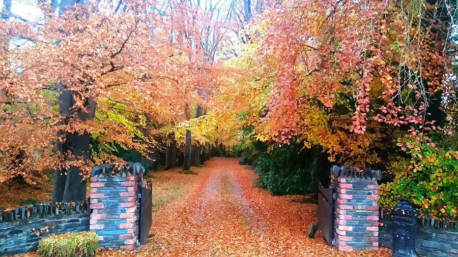 Autumn in Ireland. Tree Growth Nature Beauty In Nature Sky No People Day Outdoors Tranquility Multi Colored Ireland🍀 Irish Beauty In Nature Travel Photography Tree Plant Awe