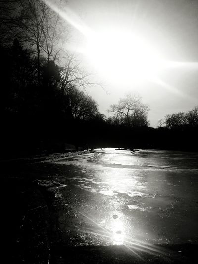 Sunlight Reflection Cold Temperature Nature Outdoors Sun Ice Beauty In Nature Tranquility Tree Day No People Frozen Pond Sunbeam Light And Shadow Winter Pleasure EyEmNature Eyemgallery Eyemphotography Eyemcollections Blackandwhite Photography
