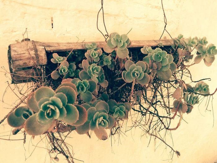 Green Nature Flowerpot Plants