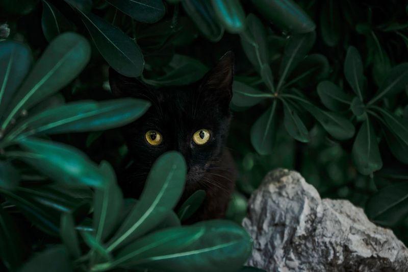 Portrait of cat amidst plants