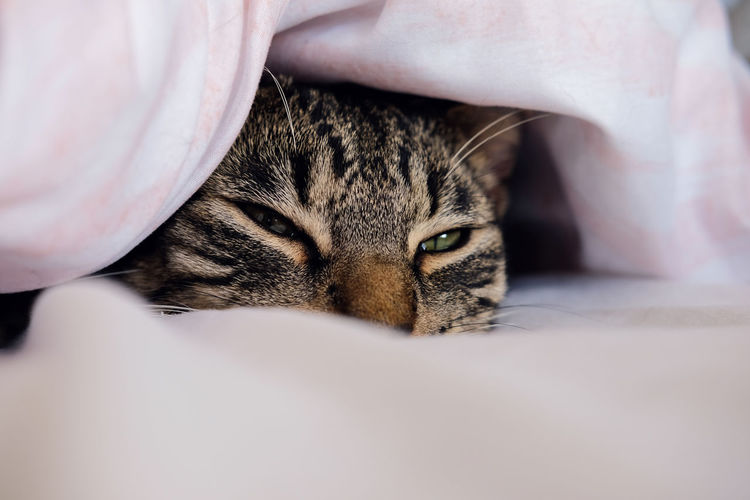 Tabby cat taking a snooze in a bed. Wellington, New Zealand. Relaxing Snoozing Animal Animal Themes Bed Cat Domestic Domestic Animals Domestic Cat Feline Indoors  Kitten Mammal Nest No People One Animal Pets Relaxation Sleeping Sleeping Cat Tabby Cat Taking A Nap Vertebrate Whisker