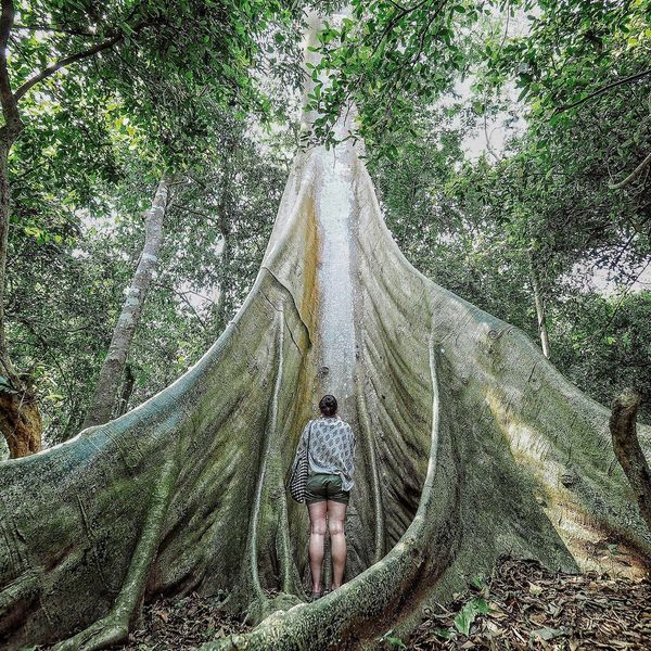 Adult Adults Only Beauty In Nature Day Forest Front View Lifestyle Lifestyle Photography Lifestyles Loei Natur Nature Nature Nature On Your Doorstep Nature Photography Nature_collection Naturelovers One Person Outdoors People Thailand Thailand_allshots Tree Tree Trees