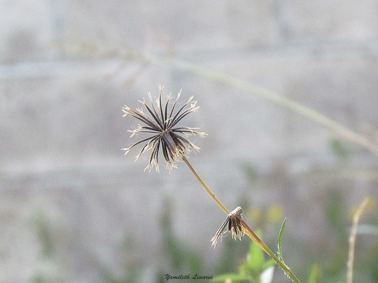 flower, fragility, focus on foreground, nature, day, plant, growth, outdoors, beauty in nature, no people, freshness, flower head, close-up