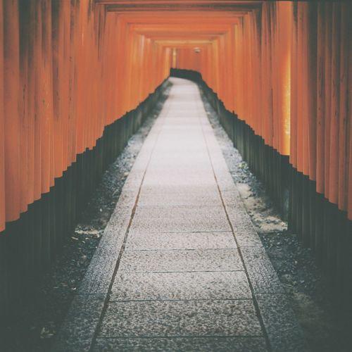 Footpath in torii gate