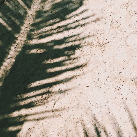 Shadow of palm leaf on field during sunny day