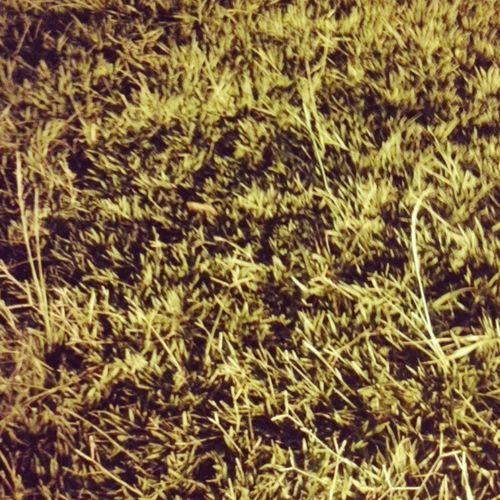 Hora do futebol... 0/ Ó meu 'MENGÃO' eu gosto de você...