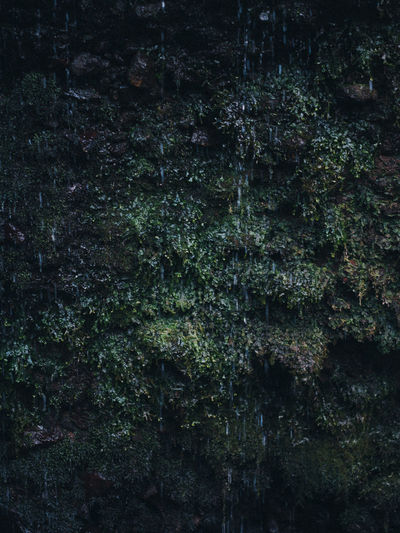 Backgrounds Full Frame Plant No People Growth Green Color Tree Nature Moss Beauty In Nature Textured  Tranquility Day Outdoors Tree Trunk Forest Trunk Land Pattern Close-up