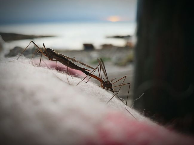 Love is in the air Funny Norway Huawei Norwegian Rustic EyeEm Selects Insect Animal Themes Close-up Shore