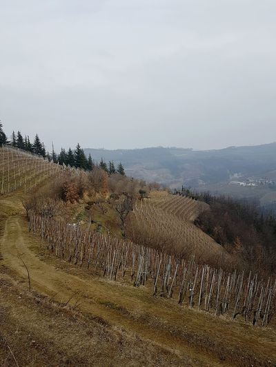 Tranquility Landscape Nature Reserve Calmness Walking In The Hills Growth Langhe Piedmont Silence Of Nature Peace And Quiet In The Nature Walking In The Nature In The Trees Foggyday Atmospheric Mood In The Vineyards Winter Vineyard Winter Landscape No People EyeEmNewHere