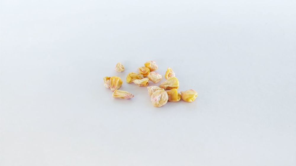 Corn Seeds Illustrative Editorial Food And Drink No People Sweet Food Food White Background Eating Healthy Eating Dried Fruit