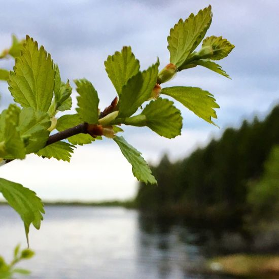 Leaf Plant Green Color Growth Nature No People Day Outdoors Water Beauty In Nature Close-up Sky Tree Freshness