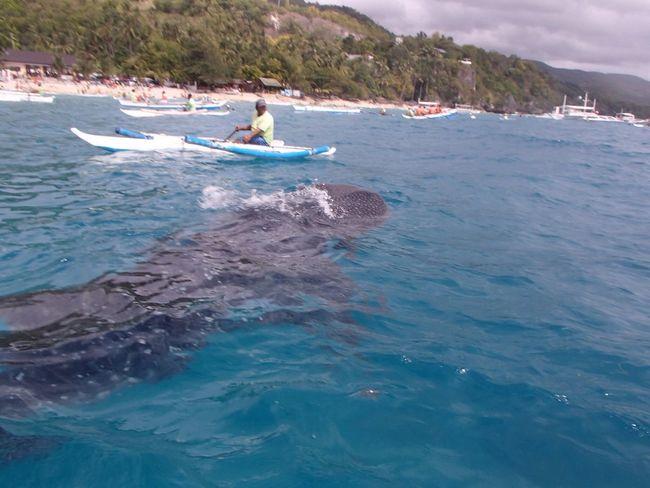 Blue Ocean Swimming Cebu Philippines