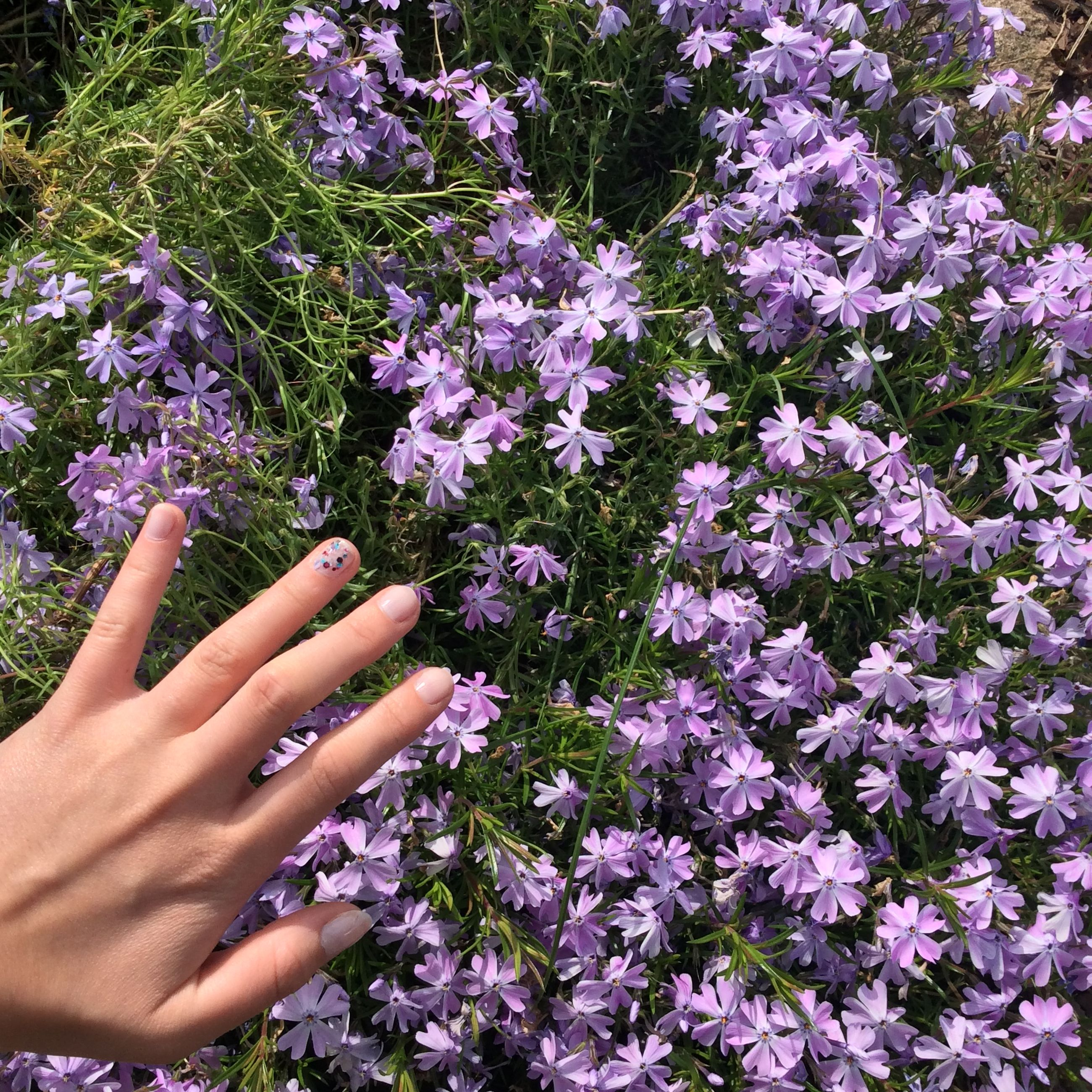 flower, freshness, growth, purple, fragility, beauty in nature, petal, nature, high angle view, plant, in bloom, flower head, blossom, blooming, abundance, botany, park - man made space, springtime, outdoors, pink color