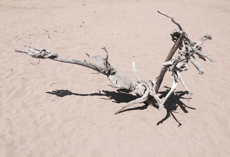 naturel art Nature No People Dead Plant Plant Land Dry Sand Day Outdoors Sunlight Branch High Angle View Tree Close-up Climate Arid Climate Shadow Desert Dried Plant Stick - Plant Part Driftwood Dried Natureart The Minimalist - 2019 EyeEm Awards The Minimalist - 2019 EyeEm Awards