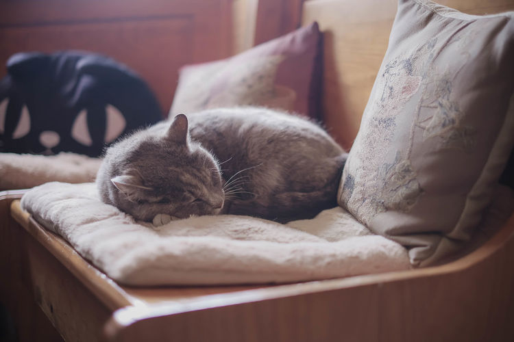 Cat sleeping on bed at home