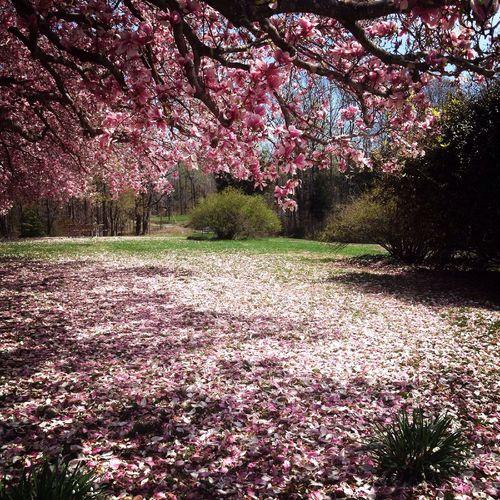 Spring Flowers Spring Springtime Nature Landscape Trees Flowers Pink Spring Into Spring South